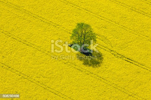 istock Aerial View of Oilseed Rape Field located in Germany 508293456