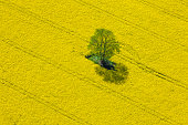 Aerial View of Oilseed Rape Field located in Germany