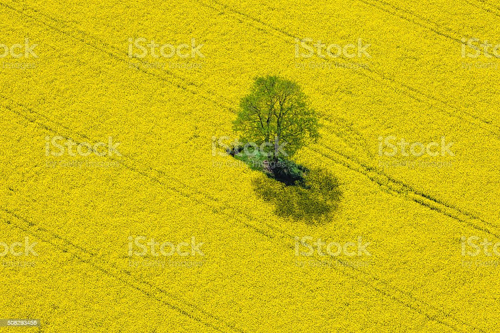 Aerial View of Oilseed Rape Field located in Germany stock photo