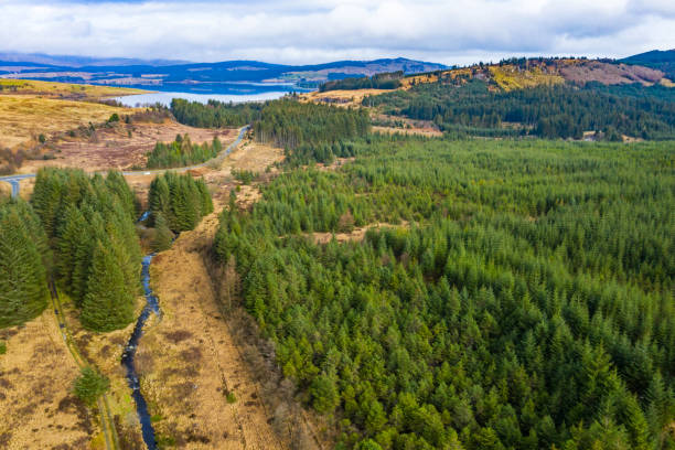 Aerial view of pine forest in a remote Scottish rural location stock photo