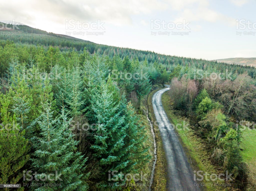 Aerial view of pine forest, The Glen of Aherlow, Tipperary, Ireland. royalty-free stock photo