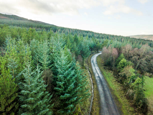 Aerial view of pine forest, The Glen of Aherlow, Tipperary, Ireland. Aerial view of pine forest, The Glen of Aherlow, Tipperary, Ireland. taiga stock pictures, royalty-free photos & images
