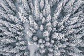 istock Aerial view of pine trees covered with snow 1096074224
