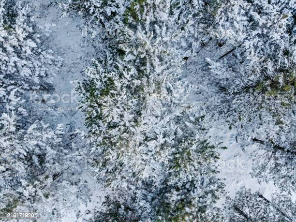 Photo of Aerial view of pine trees covered with snow