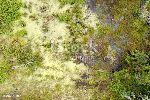 A green marsh thrives in the warm climate of Florida