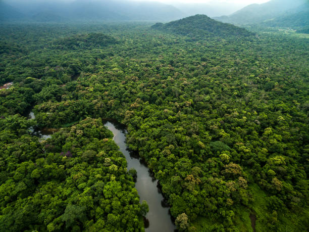 Aerial View of Rainforest in Brazil Aerial View of Rainforest in Brazil amazon river stock pictures, royalty-free photos & images
