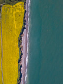 Aerial view of rapeseed fields by the Atlantic Ocean, Greystones, Wicklow, Ireland.