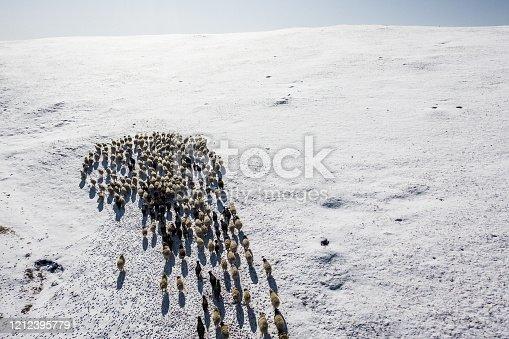 Scenic aerial  view of reindeer herd in Mongolia
