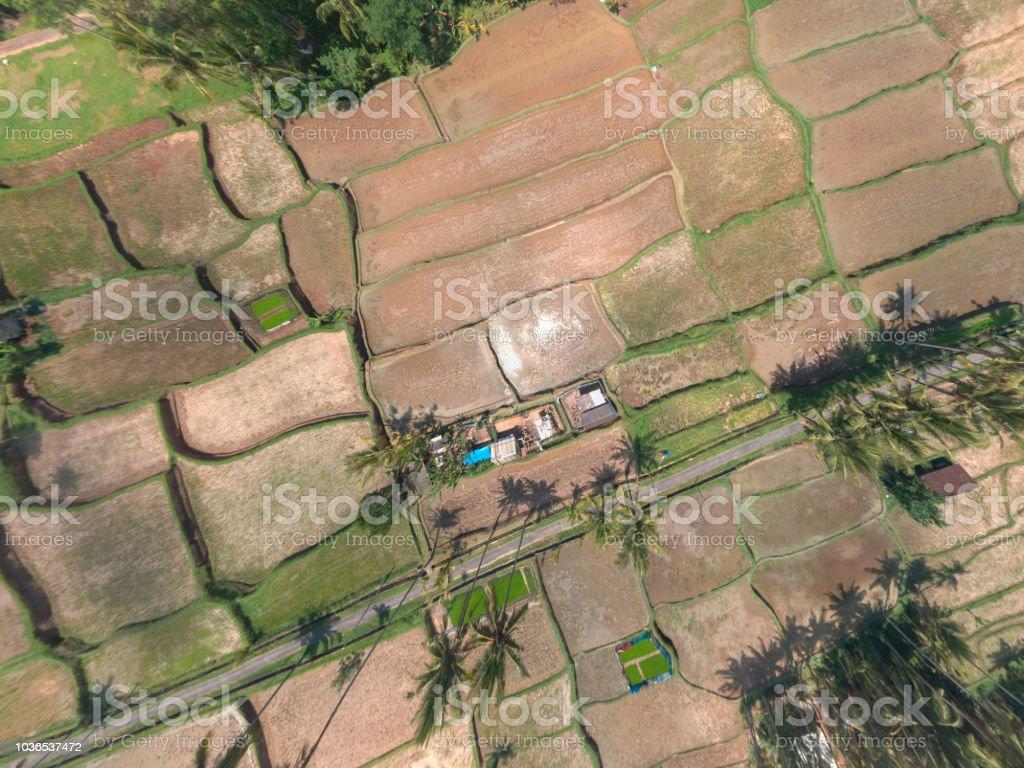 Vista Aérea De La Terraza De Los Campos De Arroz En Bali