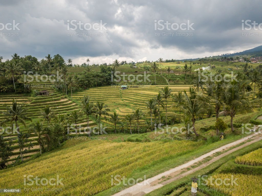 Aerial view of rice terraces in Ubud, Bali, Indonesia- Drone point of view stock photo