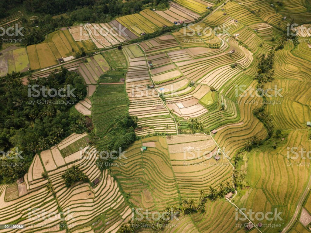 Aerial view of rice terraces in Ubud, Bali, Indonesia stock photo