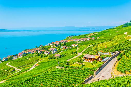 Aerial view of Rivaz and Geneva lake in Switzerland