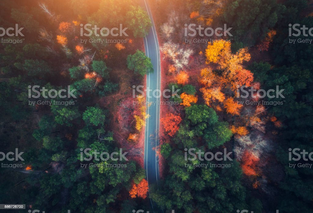 Aerial view of road in beautiful autumn forest at sunset. Beautiful landscape with empty rural road, trees with green, red and orange leaves. Highway through the park. Top view from flying drone stock photo