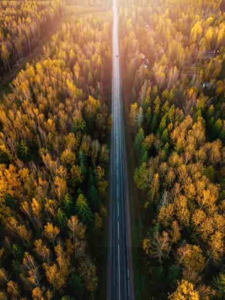 flyg vägs visning i vacker höst skog vid solnedgången på landsbygden i finland. - pine forest sweden bildbanksfoton och bilder