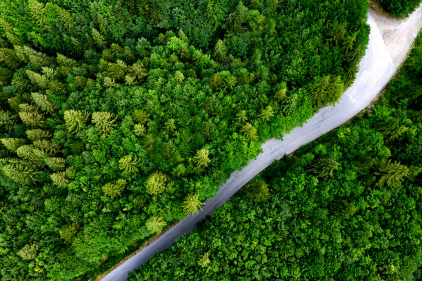 Aerial view of road with fork in the forest