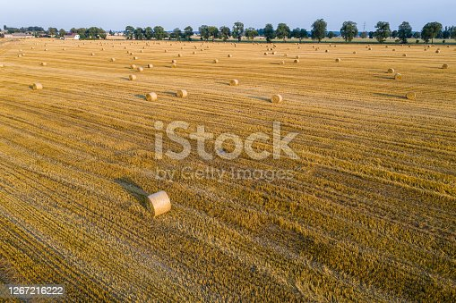 Aerial view of round hay bales on stubble, harvesting time