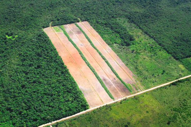 Aerial View of Slash-and-Burn Agriculture in Belize A section of rain forest has been cleared for agriculture in central Belize. deforestation stock pictures, royalty-free photos & images