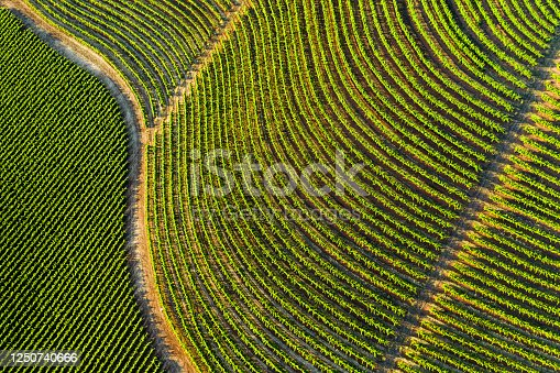 Aerial shot of lush green vineyards in Northern California wine country.