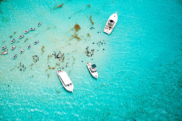 aerial view of stingrays at stingray city on grand cayman - jodijacobson stock pictures, royalty-free photos & images