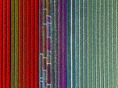 Aerial view of striped and colorful tulip field in the Noordoostpolder municipality, Flevoland, Netherlands