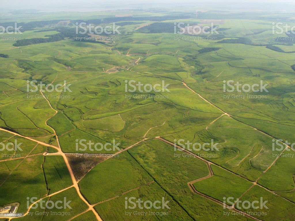 Aerial View of Sugar Cane Plantations in Brazil stock photo