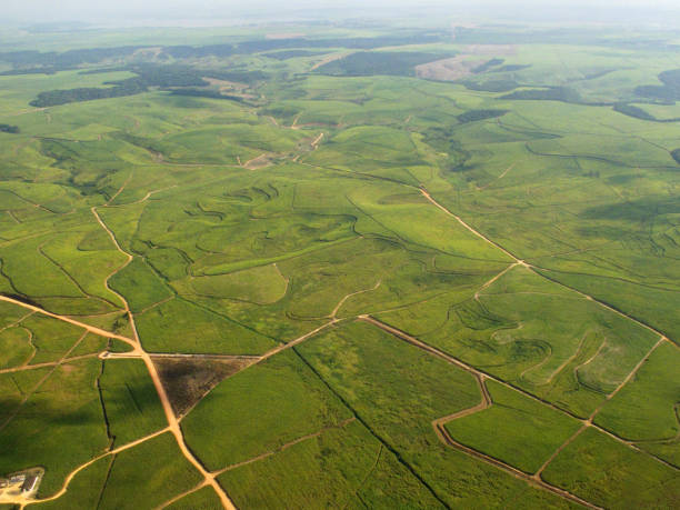 Aerial View of Sugar Cane Plantations in Brazil - foto de acervo