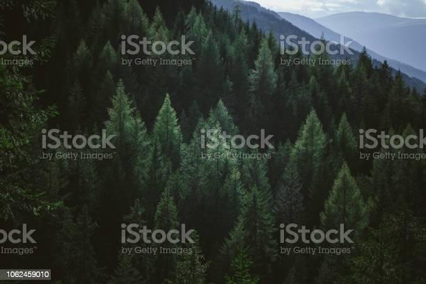 Aerial view of summer green trees in forest in mountains picture id1062459010?b=1&k=6&m=1062459010&s=612x612&h=gkqi8louwfqu15 2b ebktt4einrrz2dks 7xsci4lk=