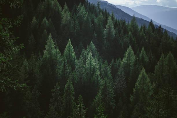 flygfoto över sommaren gröna träd i skogen i bergen - forest bildbanksfoton och bilder
