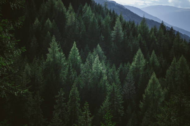 aerial view of summer green trees in forest in mountains - forest imagens e fotografias de stock