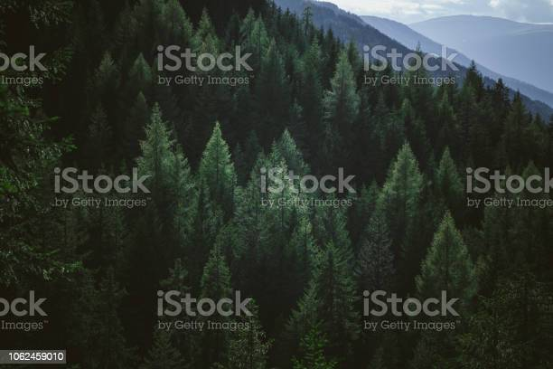 Photo of Aerial view of summer green trees in forest in mountains