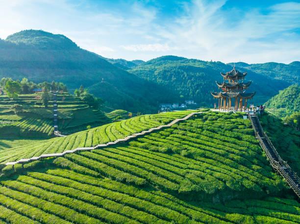 Luftaufnahme des Tee-Agrarfeldes – Foto