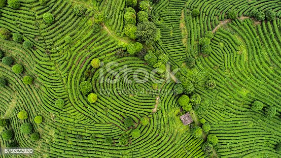 istock Aerial view of Tea fields 679322920
