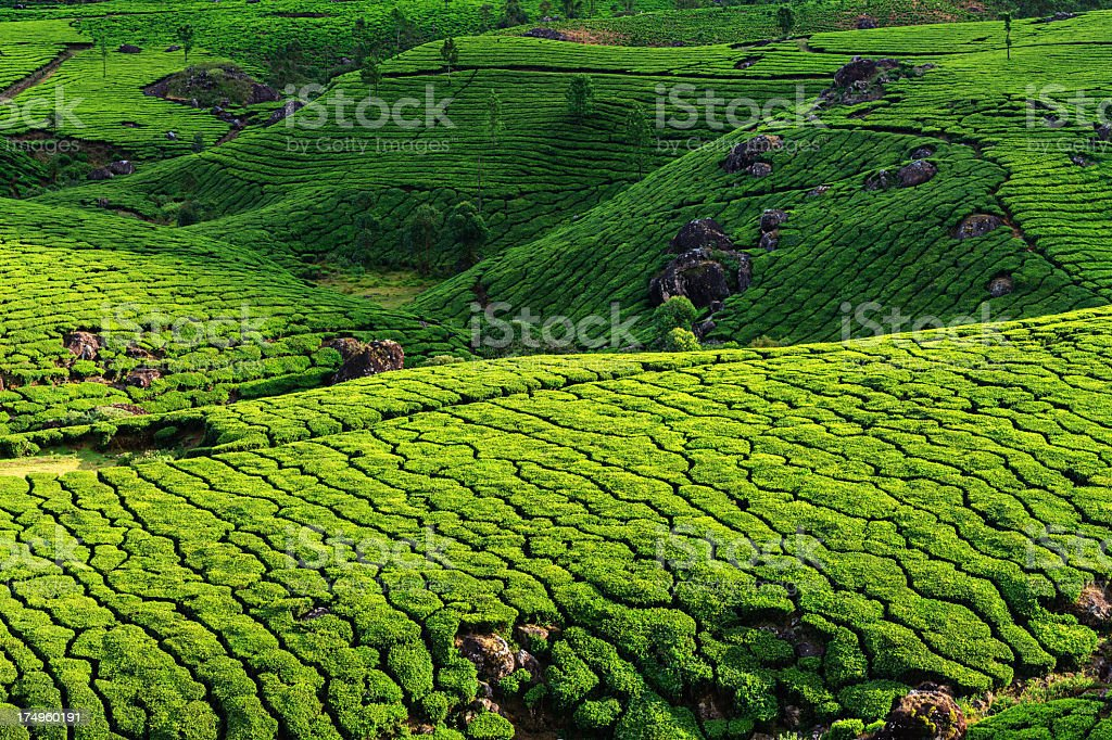 Aerial view of tea plantation in India, Asia royalty-free stock photo