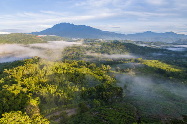 aerial view of tea plantations aerial view of tea plantations in Ranau Sabah with beautiful majestic Mount Kinabalu at background. island of borneo stock pictures, royalty-free photos & images
