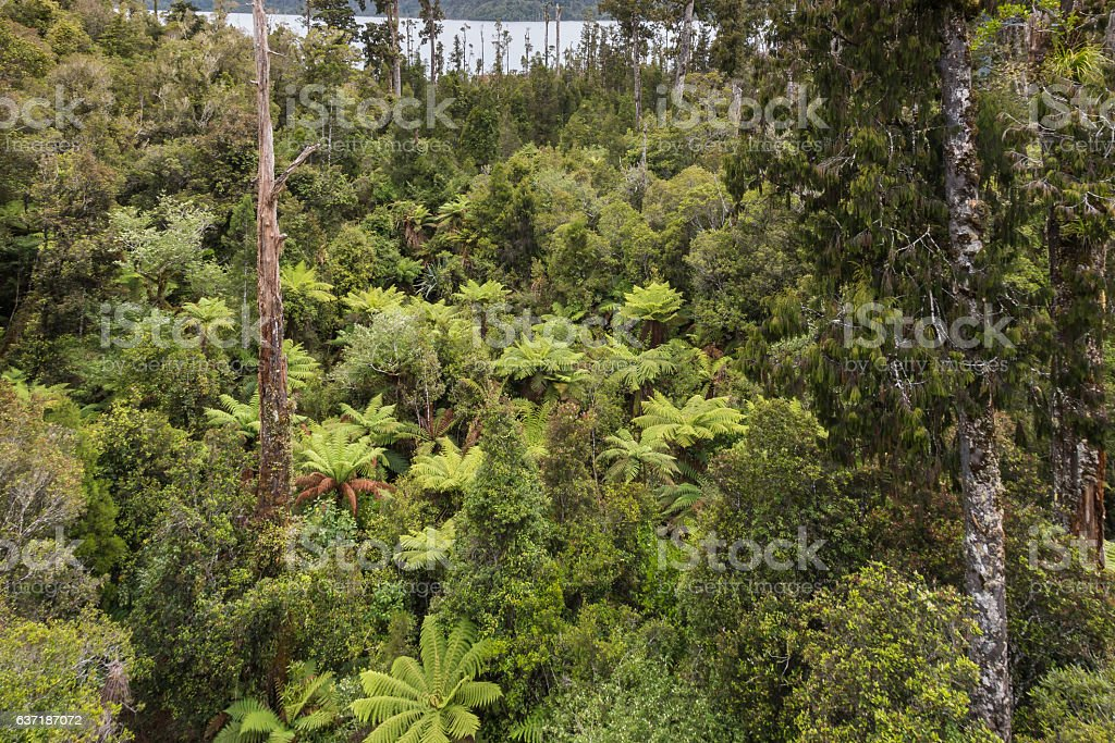 aerial view of temperate rainforest in New Zealand stock photo