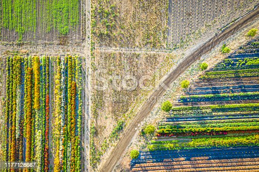 Abstract image of farmland with flower beds and crops seen from above