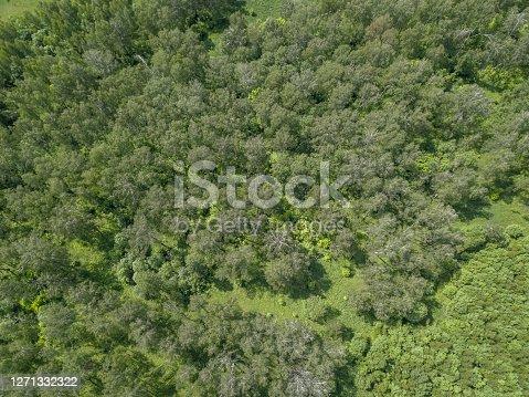Nature terrain looks like texture. Top down drone air view.