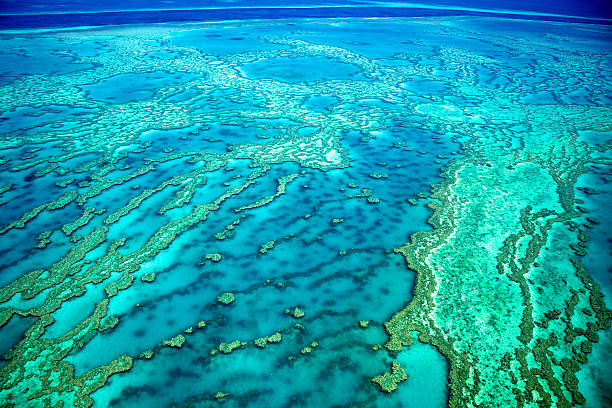 aerial view of the great barrier reef - great barrier reef stock pictures, royalty-free photos & images