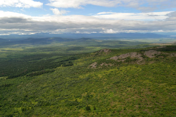 Aerial view of the green forest in the  North of  Khabarovsk territory, far East, Russia.