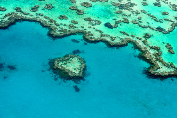 aerial view of the heart reef - great barrier reef marine park stock pictures, royalty-free photos & images