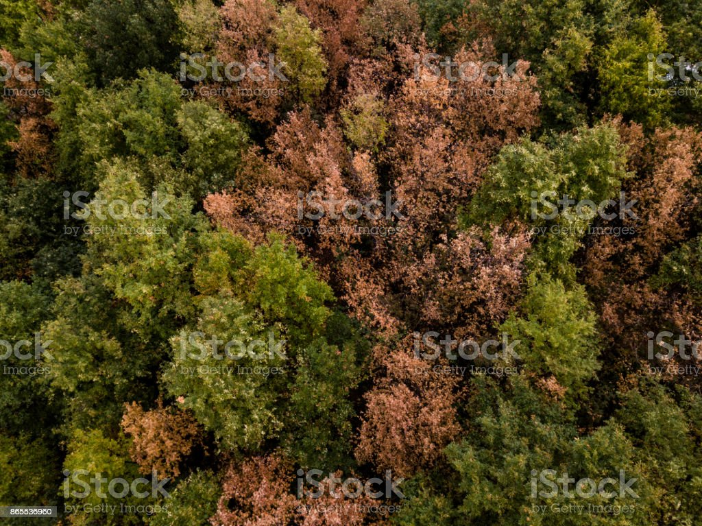 Aerial view of the Italian wild forest with tall and colorful trees at sunset. Autumn season in Italy. stock photo