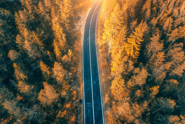 Aerial view of the road in beautiful autumn forest at sunset. Top view of perfect asphalt roadway, trees with orange foliage in fall. Colorful landscape with highway through the woodland. Travel stock photo