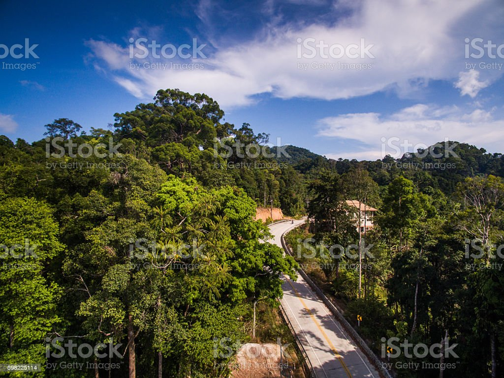 Aerial view of the road in the jungle foto royalty-free