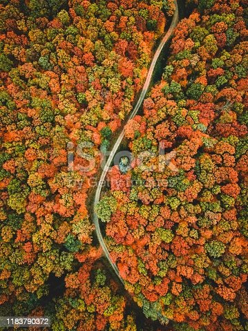 Aerial view of the road in the middle of the colorful autumn forest.  Beautiful oak forest.