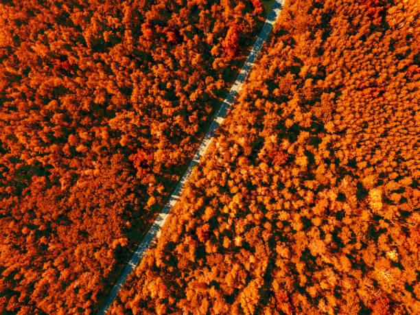 Aerial view of the road through the deciduous forest is a fine summer picture id1249855211?b=1&k=6&m=1249855211&s=612x612&w=0&h=9bnkgy4e4pjkilujwkfokvmsgg6ajrmfcp3codceob8=
