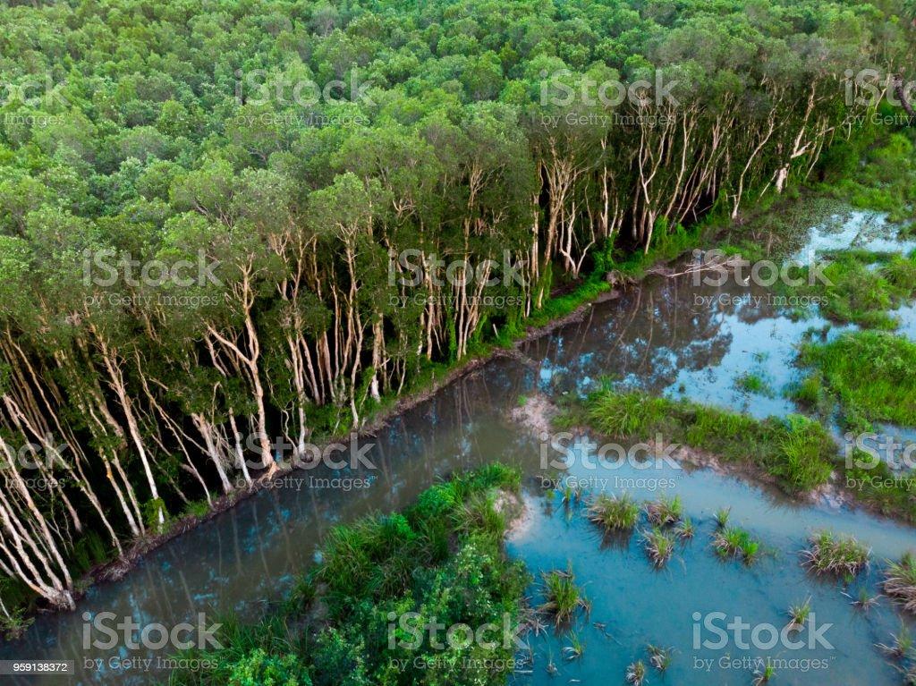 Vista aérea da plantação de seringueira - foto de acervo