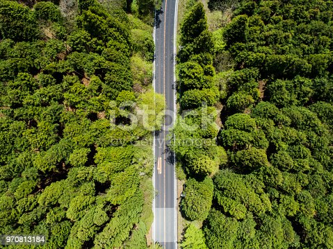 820775686 istock photo Aerial view of the straight way in forest 970813184