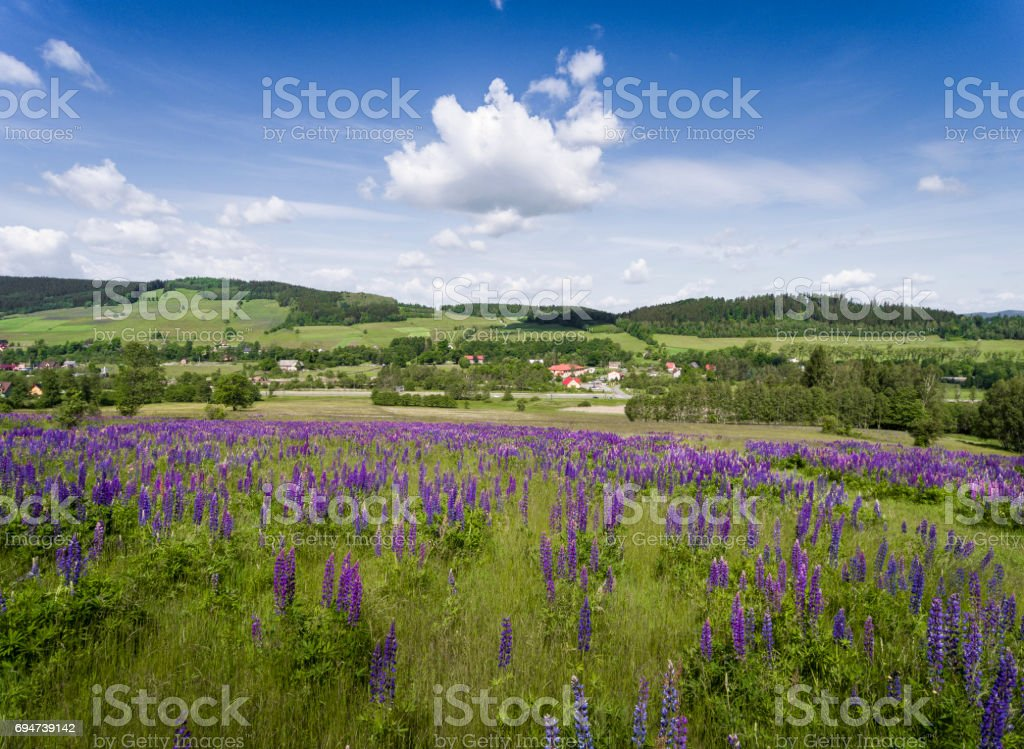 Aerial view of the summer time in mountains near Stronie Slaskie. Lupinus flowers on the hill - clouds over blue sky. View from above. stock photo