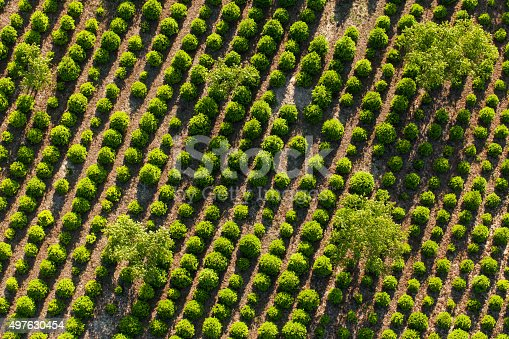 aerial view of the tree plantation in Poland