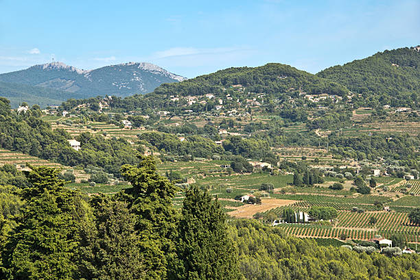 Aerial view of the vineyards of Bandol, South of France Aerial view of the vineyards of Bandol, South of France var stock pictures, royalty-free photos & images